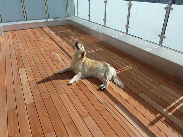 sol-et-style-projet-categorie-espaces-exterieurs-terrasse-chien-ballustrade-verre